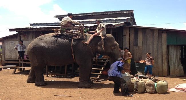 Last_of_the_Elephant_Men_6